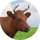 datsk icon - Dairy cattle