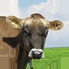 djersi icon - Dairy cattle