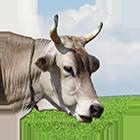 shwiz icon - Dairy cattle